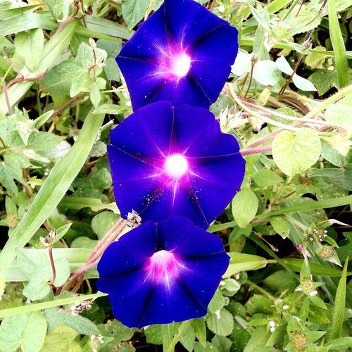 Hi! Hello World Nature Flores Flora Brasil Paraguaçu MG Samsung Galaxy S3 Jonas Rezende Flor