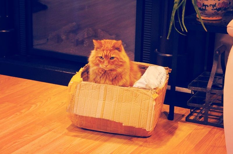 What do I do with him?! Too cute Cat Boxcat Catinabox ExcuseMe√