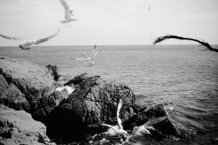 Sète birds playing withs rocks, waves and sea black and white argentique film photography 35mm SETE Seascape Blackandwhite Romantic Scenery 35mm Film Filmphotography Nofilter Seabirds Rocks And Water Waves Crashing Seascape Photography
