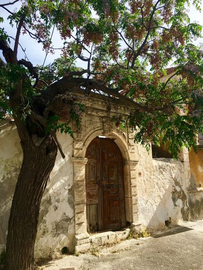 Arch Architecture Brown Built Structure Deterioration Door Doorporn Exterior Growth Lachania Nature No People Old Outdoors Rhodes Run-down Ródos Tree Vintage
