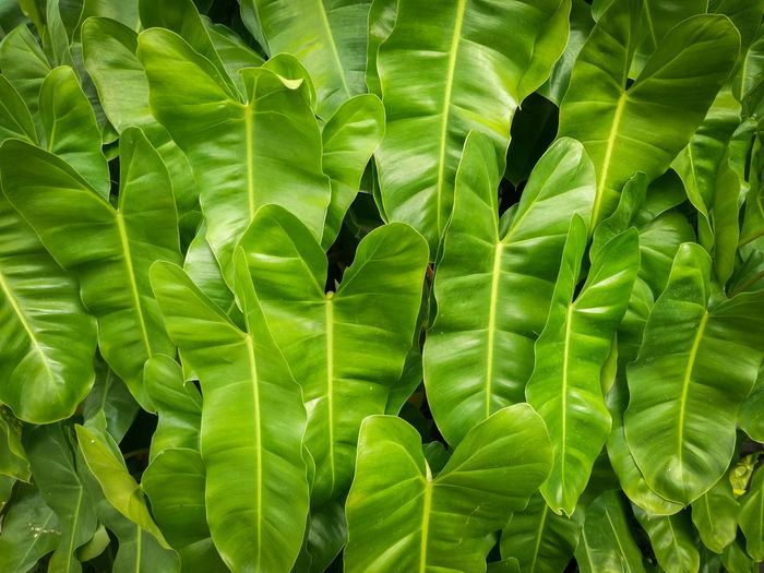 Backgrounds Beauty In Nature Close-up Day Fragility Freshness Full Frame Green Color Growth High Angle View Leaf Leaves Natural Pattern Nature No People Outdoors Plant Plant Part Tranquility Vulnerability