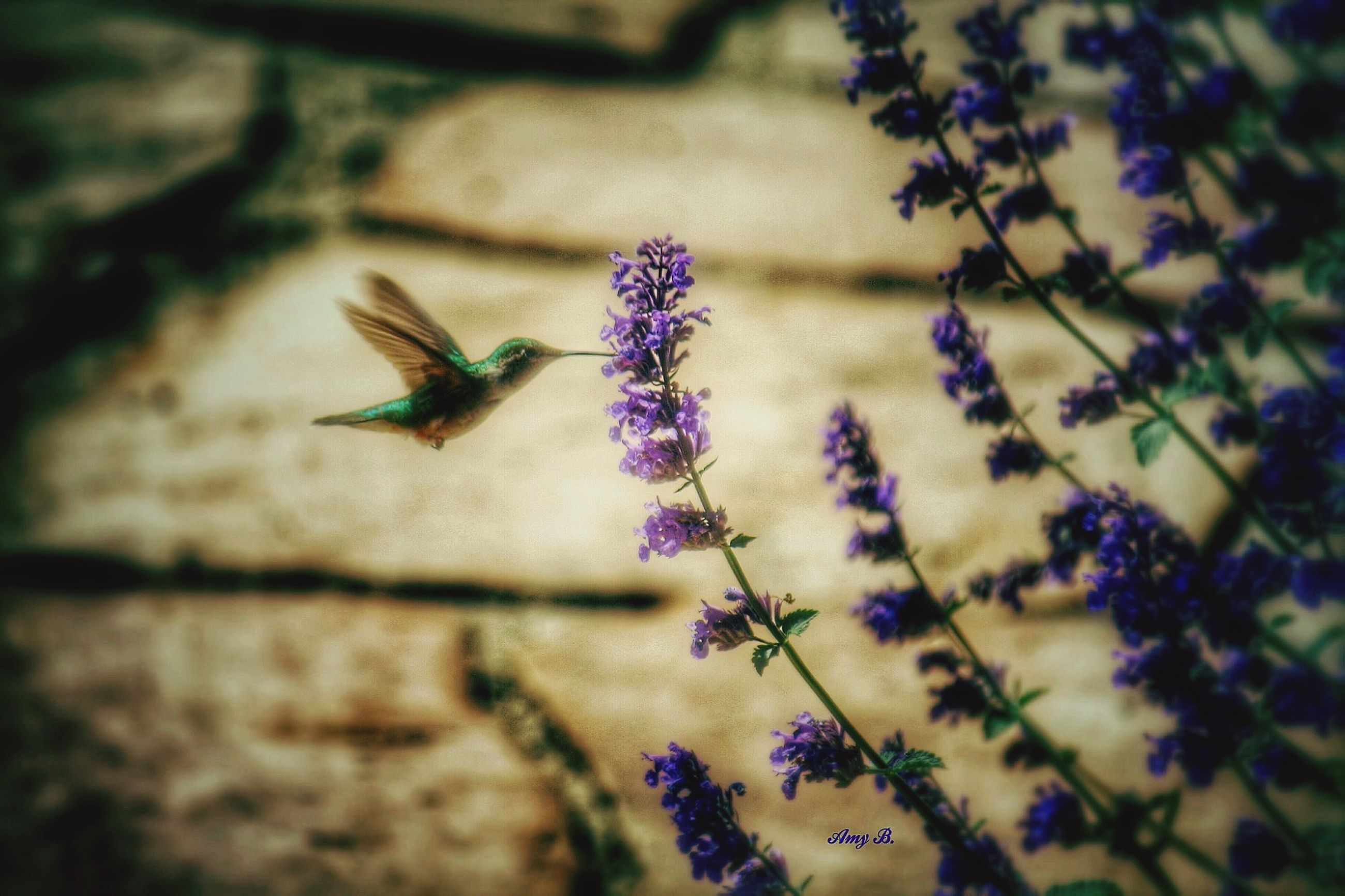 flower, insect, close-up, fragility, one animal, growth, animals in the wild, animal themes, selective focus, plant, nature, purple, wildlife, focus on foreground, freshness, beauty in nature, petal, outdoors, day, no people