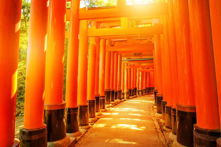 Kyoto, Japan - April 28, 2017: tourist woman walking under red torii gates of famous landmark Fushimi Inari shrine. Travel asia concept. Kyoto's popular landmark. Kyoto, Japan - April 28, 2017: Fushimi Inari Taisha is the most important Shinto shrine famous for its thousands of red torii gates.The lettering engraved on pole are the name of donated organizations Fushimi Fushimi Inari Taisha Fushimi Inari Taisha Shrine Gates Japan Photography Kyoto, Japan Shinto Shrine Shinto Temple TORII Torii Gate Tourist Tourist Attraction  Woman Architectural Column Architecture Belief Building Built Structure Diminishing Perspective Direction Fushimi Inari Kyoto Fushimi Inari Shrine In A Row Japan Culture Kyoto Kyoto Japan Kyoto,japan Kyotojapan No People Orange Color Outdoors Place Of Worship Religion Repetition Shinto Of Japan Shintoism Shrine Spirituality The Way Forward Torii Gate Japan
