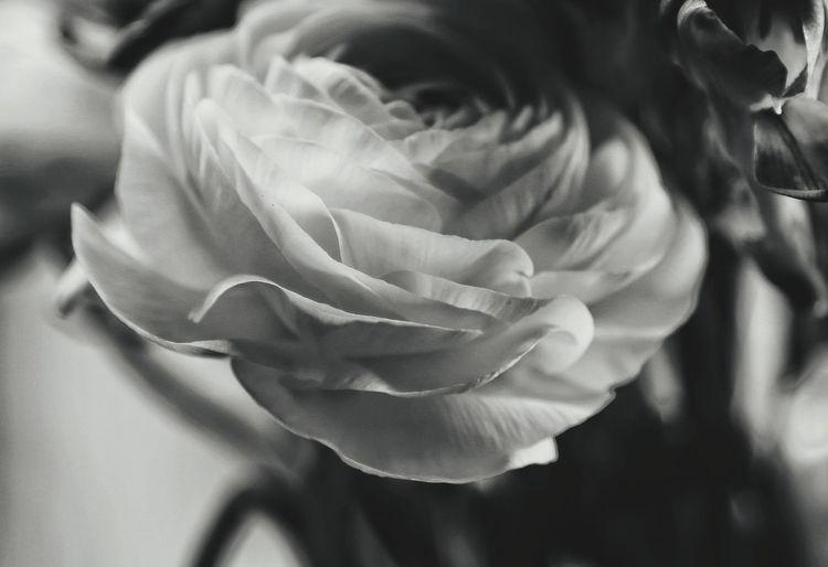 Roses Roses🌹