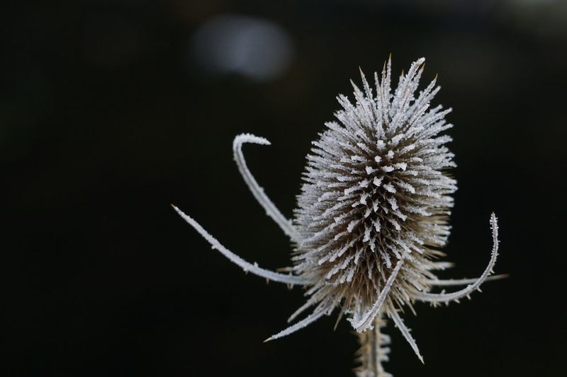 Plant Focus On Foreground Nature Close-up Beauty In Nature Fragility No People