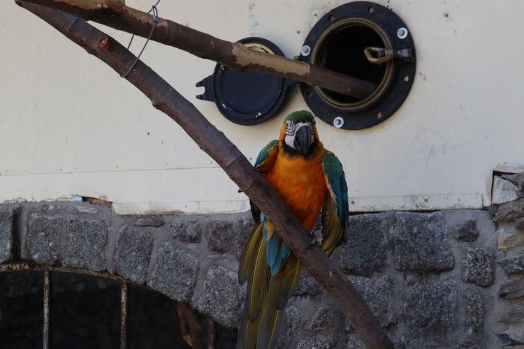 View of bird perching on metal
