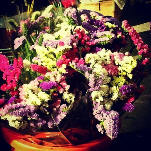 Rambla amb flors. Igersgirona Incostabrava Girona10 Instagirona @costabravapirineu