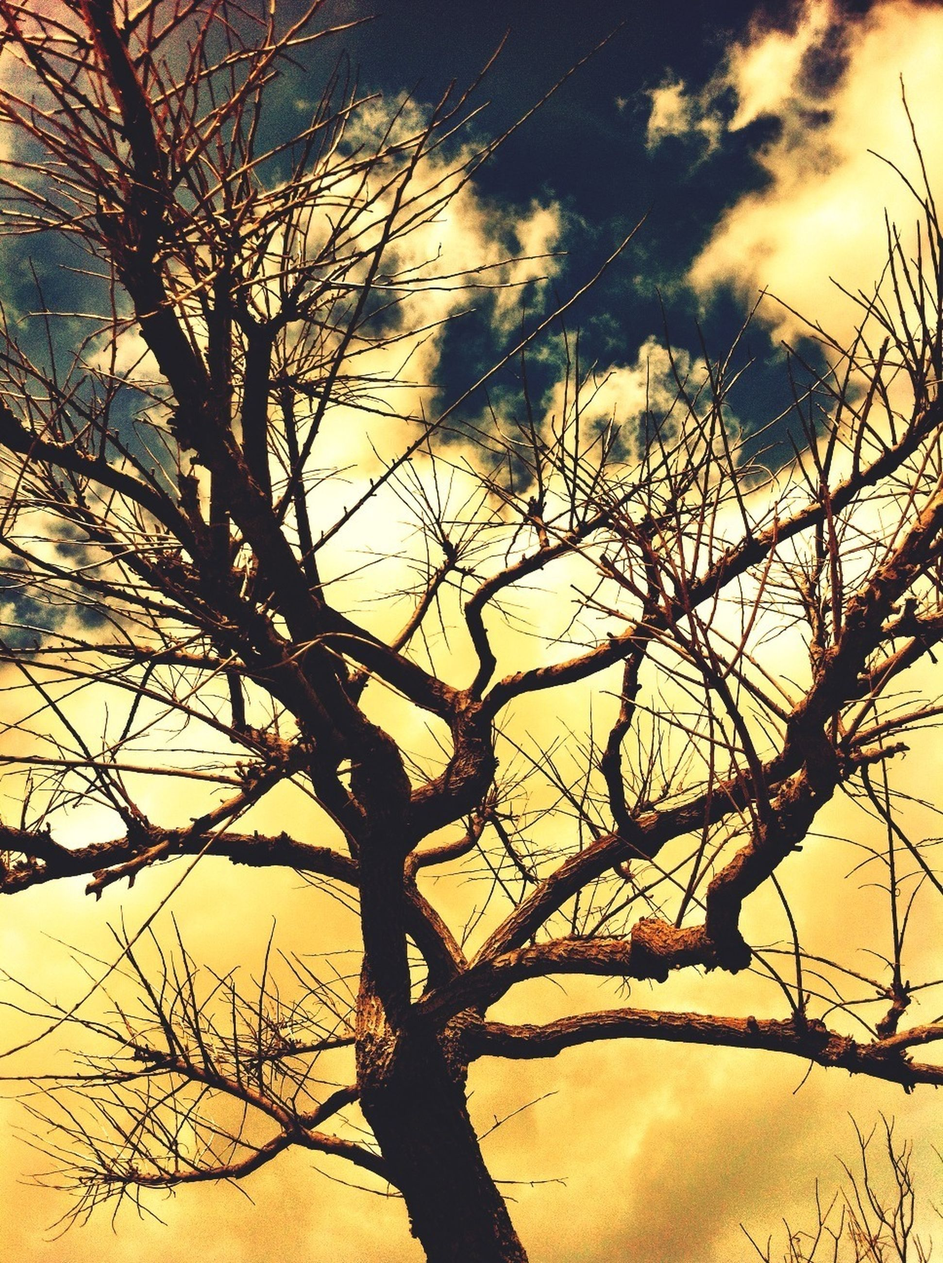 bare tree, branch, tree, low angle view, sky, tranquility, sunset, silhouette, nature, beauty in nature, scenics, tranquil scene, cloud - sky, tree trunk, outdoors, no people, orange color, idyllic, growth, cloud