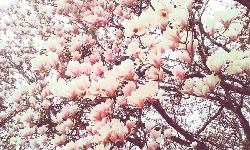 Baum Mit Blumen Live For The Story