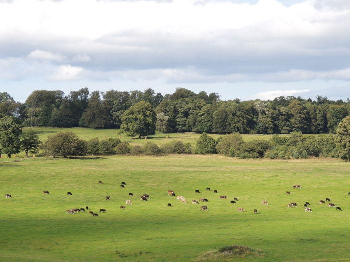Flock of birds on grassy field against sky
