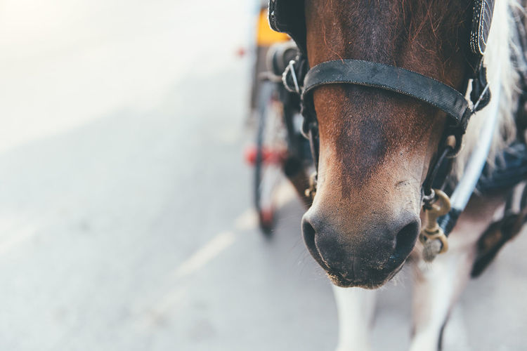 Close-up of horse on street