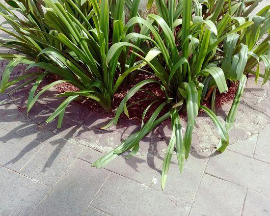 Go Grass Green Ssclix SSClickPics SSClickpix SSClicks Leaf Close-up Plant Green Color Plant Life Blooming Growing