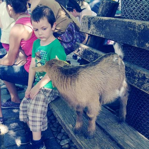 Hi! Feel The Journey Lifestyles Children Goat Life Goat Zoo Animal Animal What's Up? Waiting ... Moment Interesting Moment