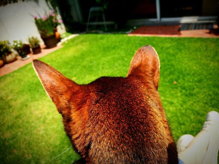 Cat Pets Garden