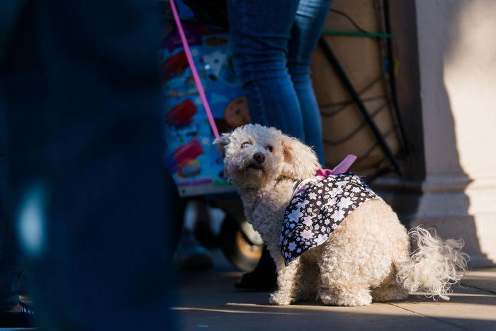 Dog Walking Dog Adoption Dog Sitting Dog Dog Rescue Doggy Pet Rescue Small Dog
