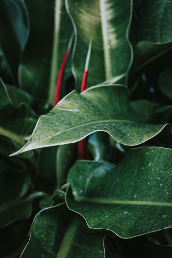 High angle view of plant leaves