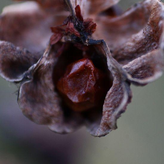 Semillas SemillaS / SeedS Seeds Seeds Flower Seeds Of Life Seeds Photography Planta Plants 🌱 Natura Naturalovers