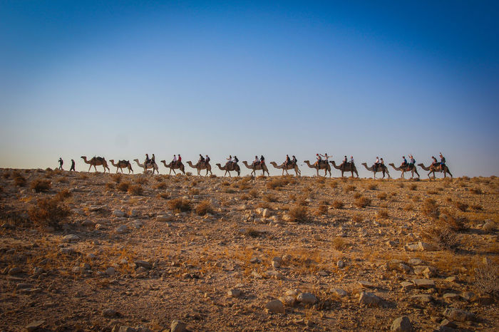 Beauty In Nature Blue Camel Clear Sky Convoy  Day Horizon Over Land Israel Landscape Nature Non-urban Scene Outdoors Sky Tranquil Scene Tranquility