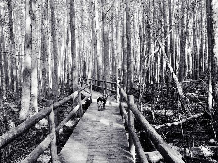 Cedar Bridge EyeEm Gallery Tadaa Community Monochrome NJ Pinebarrens Nature Forest Tree Tranquil Scene Outdoors Tranquility Beauty In Nature Day Scenics No People