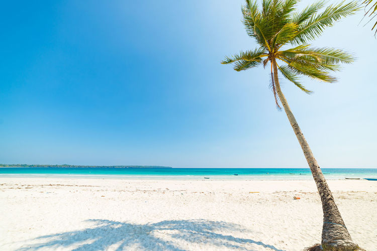 Sea Water Beach Land Sky Tropical Climate Palm Tree Beauty In Nature Scenics - Nature Sand Horizon Over Water Horizon Nature Tranquility Blue Tree Tranquil Scene Clear Sky Idyllic Coconut Palm Tree No People Outdoors Tropical Tree Turquoise Colored