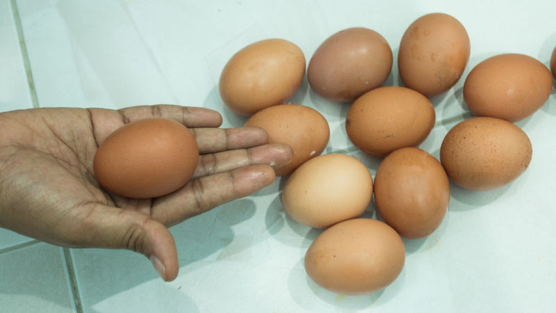 Animal Egg Close-up Eggs Food Freshness Organic Protein Still Life