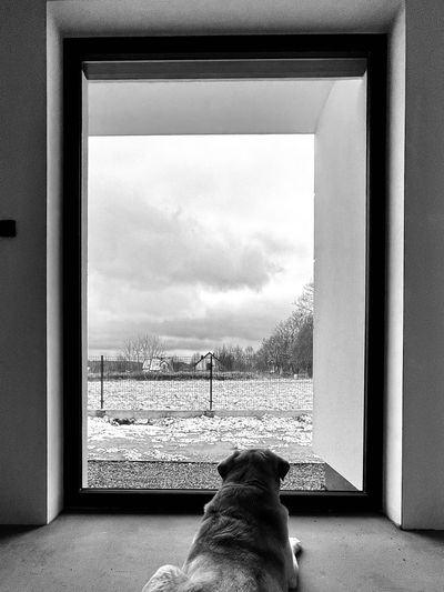 Rear view of dog looking through window