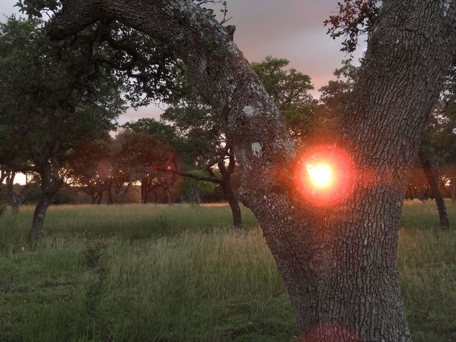 Sunflare in the woods Plant Tree Sky Growth Nature Beauty In Nature Field Grass Sunset Sun No People Lens Flare Sunlight Green Color Outdoors Land Scenics - Nature