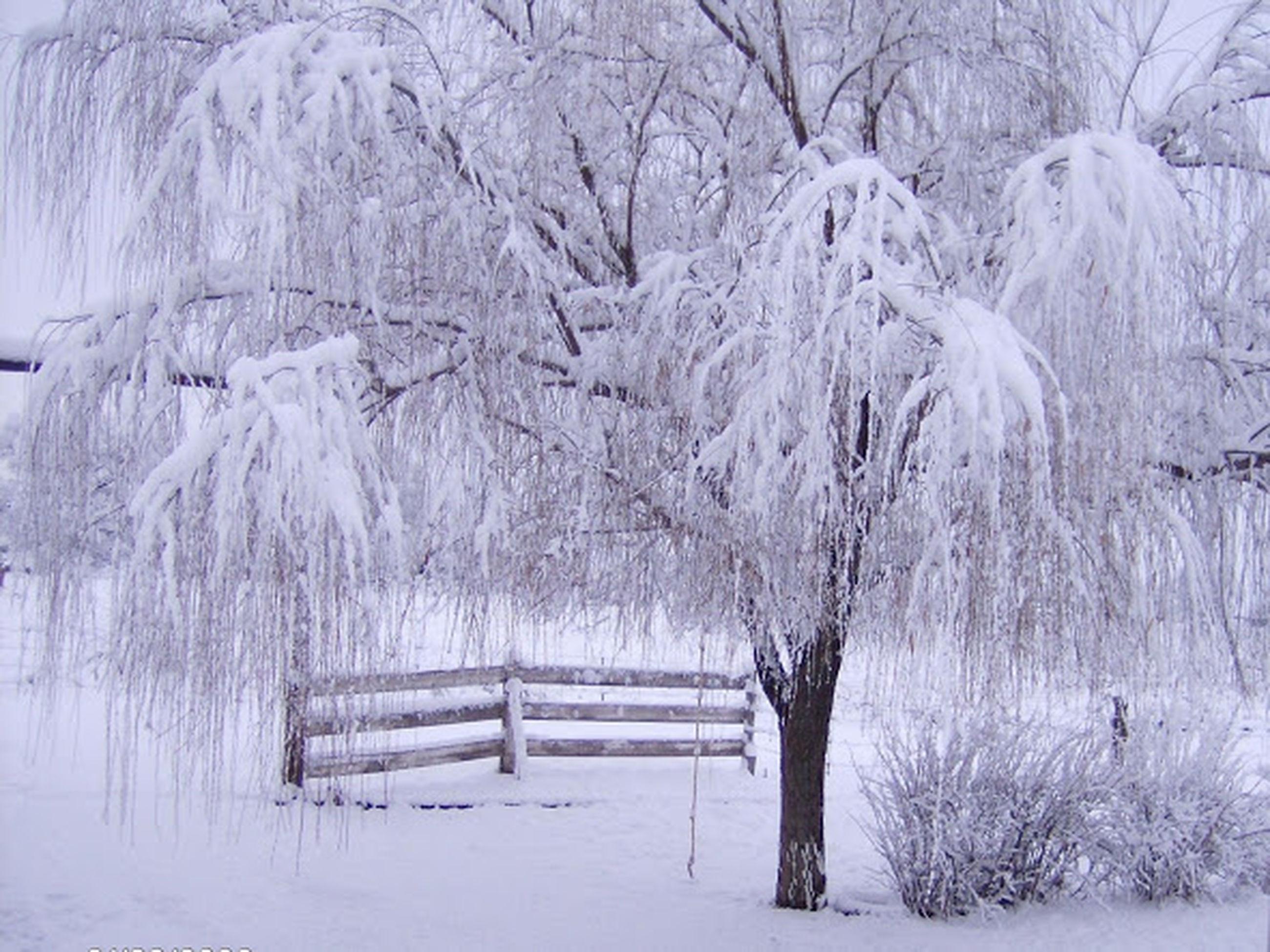 snow, winter, cold temperature, season, weather, covering, tranquil scene, tranquility, tree, landscape, nature, beauty in nature, frozen, scenics, field, bare tree, covered, white color, non-urban scene, bench