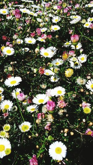 Flowers Daisy Chains  Childhood Memories Flower Power