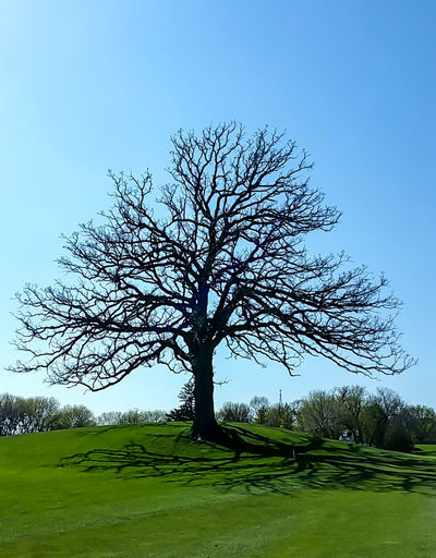 Bare Tree Beauty In Nature Blue Bradley Olson Bradleywarren Photography Branch Clear Sky Day Field Grass Grassy Green Color Growth Idyllic Landscape Nature Non-urban Scene Scenics Single Tree Sky Solitude Tranquil Scene Tranquility Tree Tree Trunk