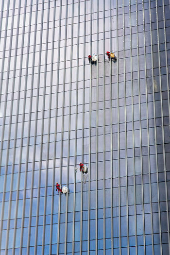 Four cleaners in two teams, with good safety equipment, hanging high on ropes and cleaning many blue glass windows of a modern building. Architeture Blue Building Cleaner Contemporary Equipment Four Glass Hanging Out Lines Modern People Reflection Ropes Safe Tea Two Windows Worker