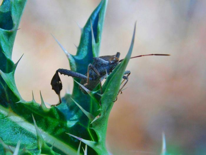 Close-up of black stink bug on leaf