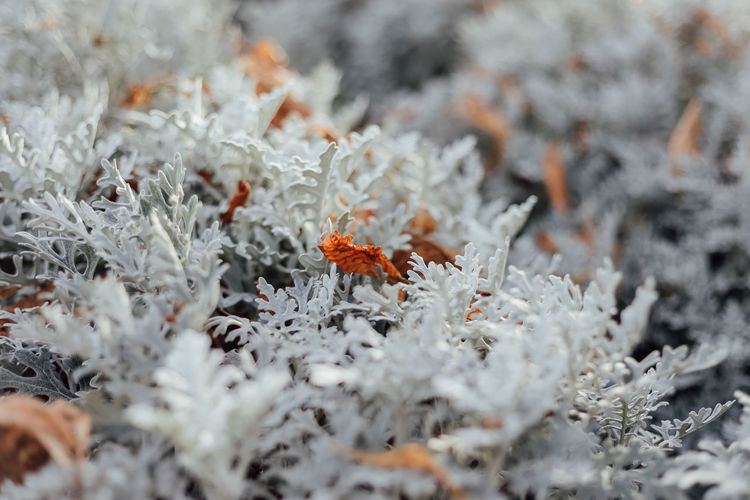 Selective Focus Close-up Plant No People Nature Winter Cold Temperature Full Frame Day Beauty In Nature White Color Orange Color Outdoors Growth Backgrounds Fragility Vulnerability  Grey Autumn