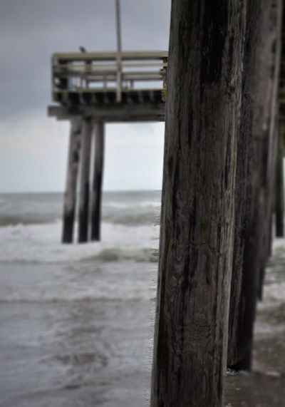 Beach Beauty In Nature Close-up Day Focus On Foreground Horizon Over Water Nature No People Outdoors Scenics Sea Sky Tree Tree Trunk Water Wooden Post
