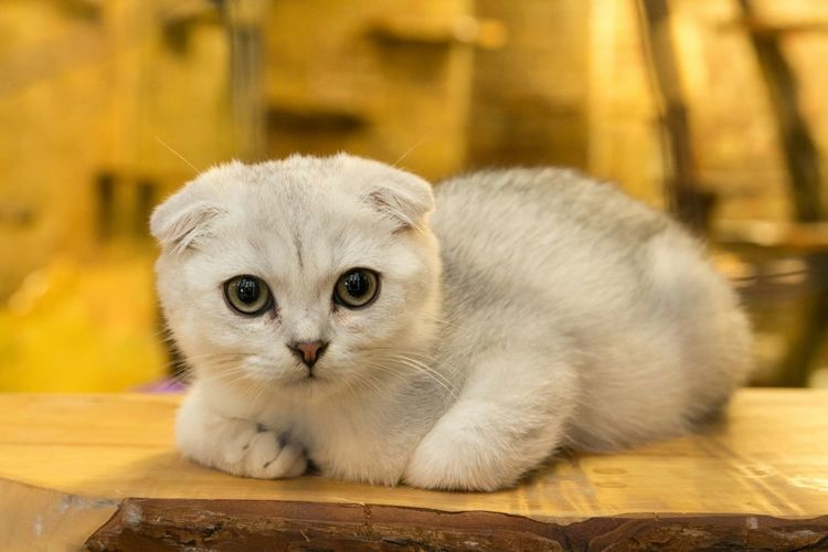 Cutey from the cat Café Check This Out Nature_collection Cat♡ Cats Of EyeEm Catlovers Cats Kitty Catsagram Hellokitty