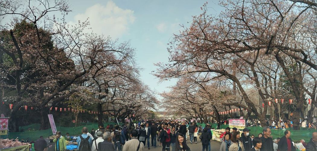 #cherryblossom #ueno Bare Tree Casual Clothing City City Life Cloud Cloud - Sky Crowd Day Growth Large Group Of People Leisure Activity Lifestyles Mixed Age Range Nature Outdoors Sky Tourism Travel Destinations Tree Tree Trunk