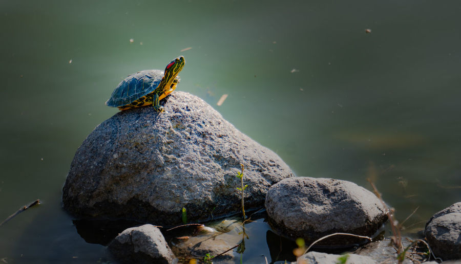 High angle view of bird on rock by lake