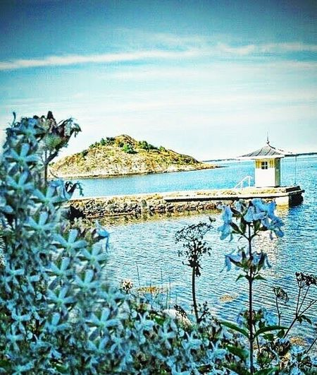 Seacoast Sweden Water Nature Sky Lake Built Structure Beauty In Nature Flower White Sea Blue Summer Beautiful Amazing Sun Love Millennial Pink