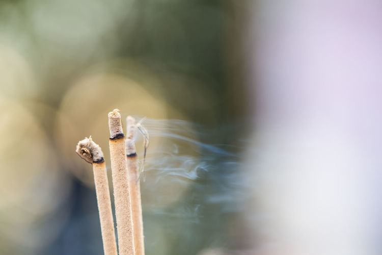 Close-Up Of Burning Incense Sticks Outdoors