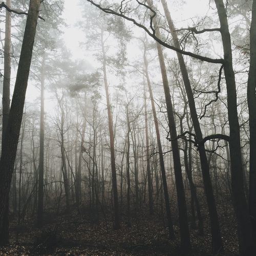 IPSSquare VSCO How's The Weather Today? Poznań Foggy EyeEm Best Shots Iphoneonly EyeEm Nature Lover Wood IPSNatural IPS2015Fall