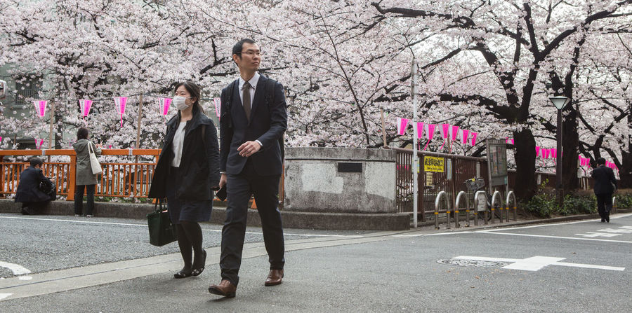OKYO, JAPAN - APRIL 1ST, 2016. Tourist and locals enjoying the cherry blossoms at the street of Meguro River, during Japan's annual cherry blossom festival. Beautiful Bloom Blossom Cherry Destination Festival Floral Flower Footpath Japan Meguro Nature River Riverside Sakura Scenery Season  Spring Street Stroll Tokyo Tourism Tree Walking