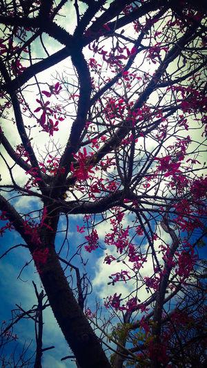 Photography Nikon D5100 Fotografia Photooftheday FotoDelDia Montevideo Uruguay Branch Twig Sky Close-up Plant Life Flower Tree Botany