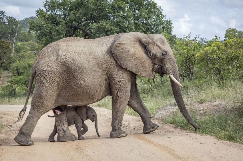 50+ Animal Trunk Pictures HD | Download Authentic Images on