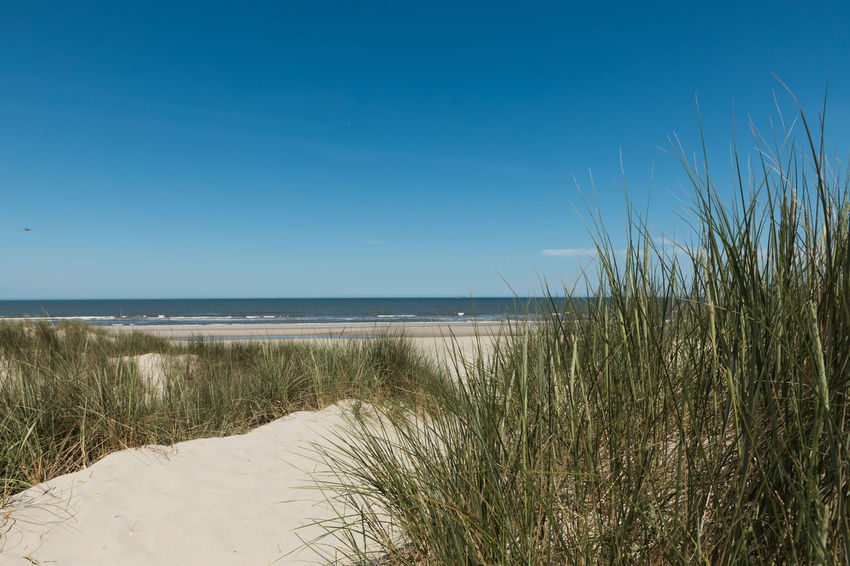Beach access. Beach Beach Day Beachphotography Beauty In Nature Blue Clear Sky Grass Horizon Horizon Over Water Land Marram Grass Nature No People Outdoors Plant Sand Scenics - Nature Sea Seascape Sky Timothy Grass Tranquil Scene Tranquility Water