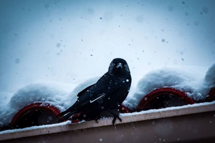 View of birds on snow covered landscape during rainy season