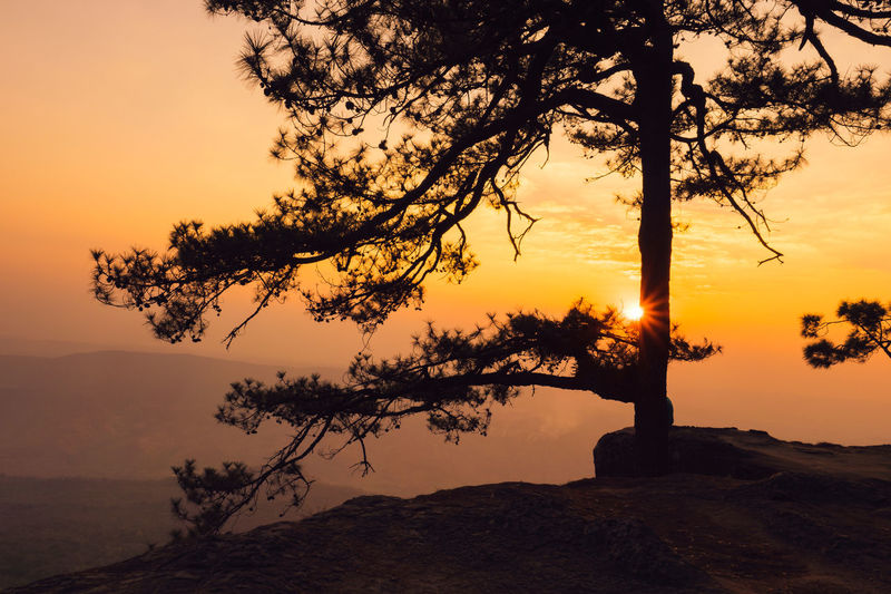 Silhouette Tree On Rock Against Sky During Sunset