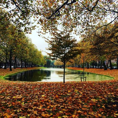 Autumn Nature Autumn🍁🍁🍁 Leaf Tree Beauty In Nature