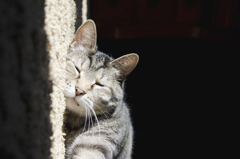 Tilt Image Of Cat Sleeping On Rug