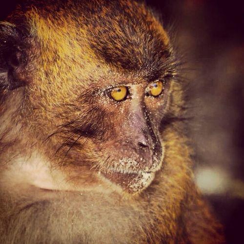 Monkey Island! Travelling Thailand