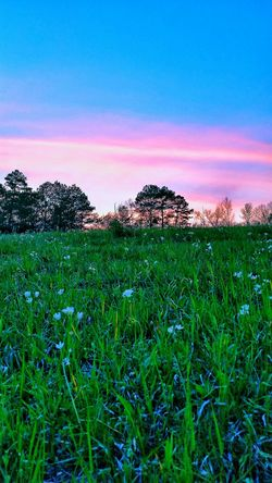Landscape With WhitewallYellow Flower Nature Photography Outdoor Photography Wildflowers Springtime Flowers Easter Clouds Landscape Sunset Pink Purple Flowers Of EyeEm Sky Trees Sunsets Of Eyeem Pasture Landscape Of Eyeem Landscape_photography Wildlife Photography Sun Kissing The Day Goodbye Blue Wave